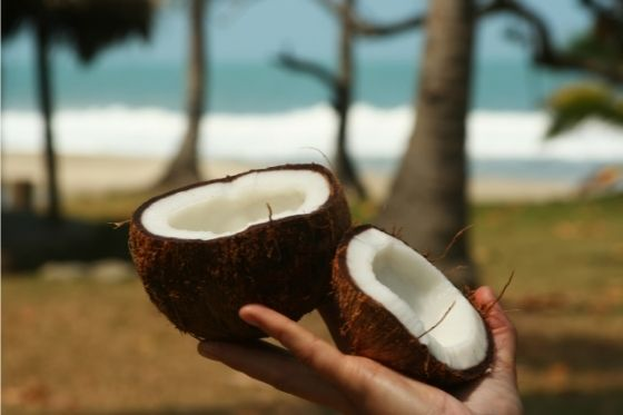 Illustration produit crème de coco La Maison du coco