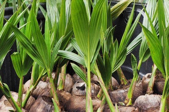 Image for La Maison du coco organic coconut flour product